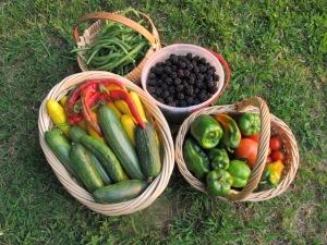 Fresh Local Produce - Yum!