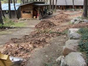 leaves_1737web